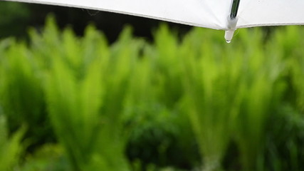Closeup of umbrella corner and water drops drip fall on plants