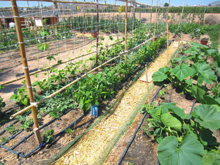 summer plants in vegetable garden
