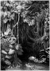 Jungle : European Invaders - 18th century