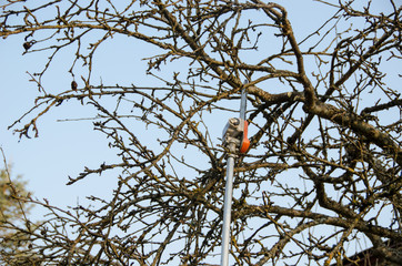 pruning fruit tree, seasonal garden spring work