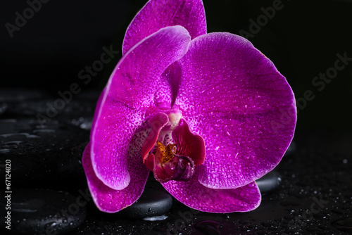 Tuinposter Lilac spa still life with beautiful deep purple flower orchid, phalae