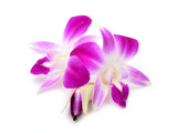 Fototapety beautiful blooming orchid isolated