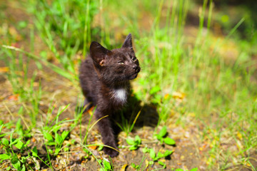 Black kitten in the green grass