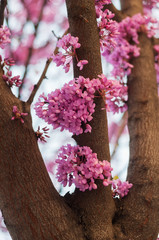 Pink flowers growing on tree