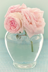 Beautiful fresh pink roses in a vase on a blue background .