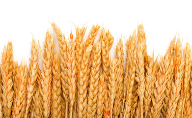Sheaf Golden Wheat Ears