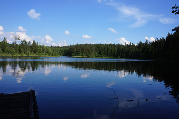 Lake in the deep forest