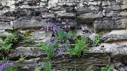 Flowers on the Stone