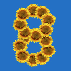 Sunflower number eight