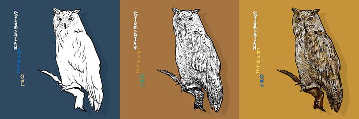 siberian eagle owl, or bubo bubo sibiricus.vector