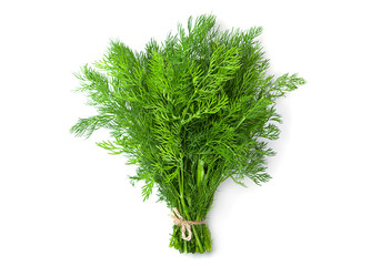Dill herb