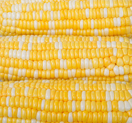 corn yellow and white good for background