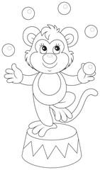 Circus Monkey juggler