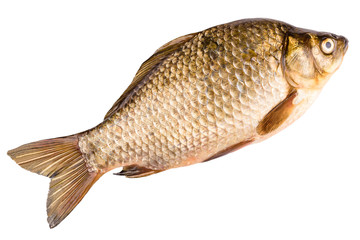 crucian isolated on white background