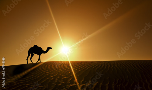 Fotobehang Kameel Silhouette of a camel walking alone in the Dubai desert
