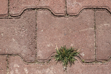 weeds between the bricks of the paver elements