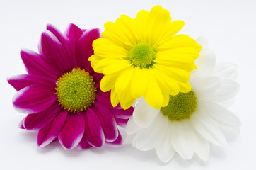 Three chrysanthemums