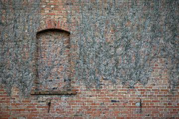 Zugemauertes Fenster und trockene  Weinranken