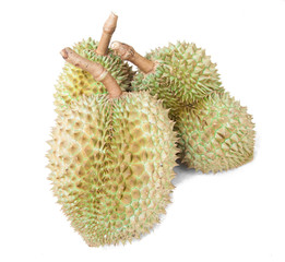 Durian fruit isolated white background