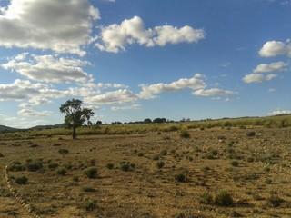Paesaggio desertico con albero