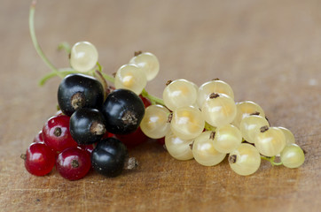 White, red and black currant