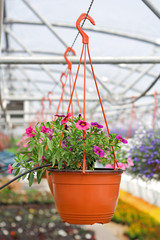 Hanging flowerpots / Automatic irrigation system (drop by drop)