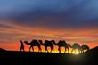 Zdjęcia na płótnie, fototapety, obrazy : Desert caravan