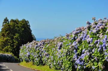 Hecke auf den Azoren