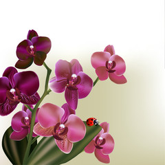 Background with vector orchid  flowers