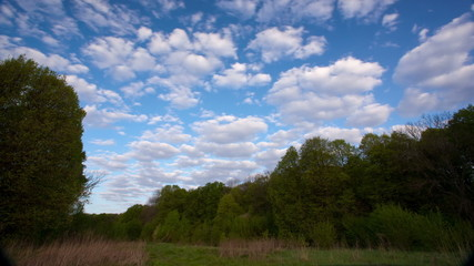 Wood landscape  with  blue clouds and skyю,without birds .