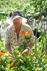 Woman in hat cuts off lily flowers. gardening.