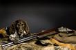 deutscher Wachtelhund Welpe 0010