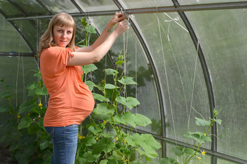 The pregnant woman ties up plants of cucumbers in the greenhouse