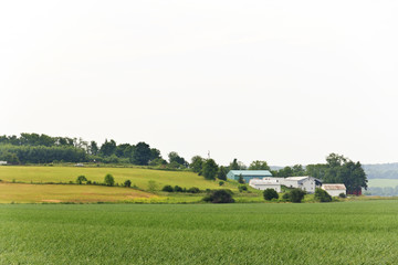 Summer Farm Landscape