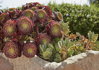 Italy, Sicily, countryside, succulent plants in a garden