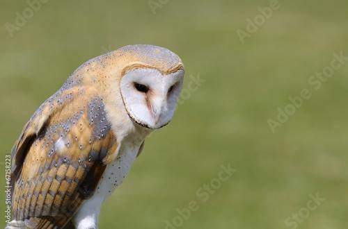 Aluminium Uil Barn owl.