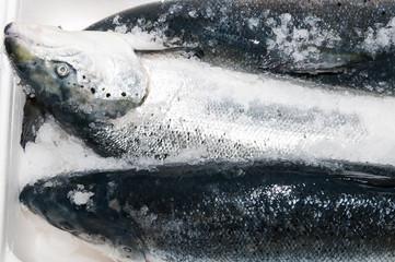 fresh frozen salmon in a plastic box