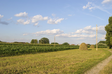 Farm in Summer