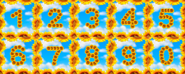 Sunflower number collection