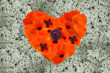 Heart of poppies on a background of milfoil