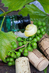 Wine bottle with grapes, snail and corks
