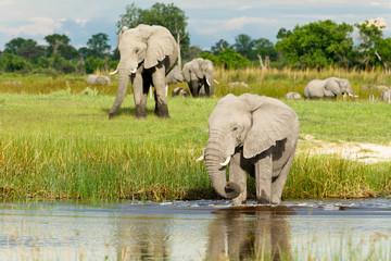 2 Elefanten am Wasser