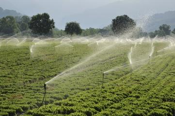 La danza degli irrigatori