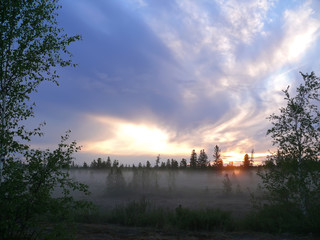 The landscape of the Northern nature. Forest at sunset