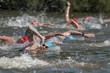 canvas print picture - Triathleten beim Schwimmen