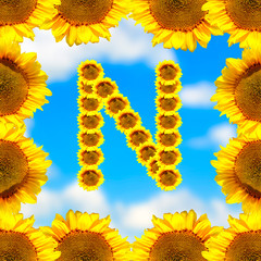 Sunflower letter N