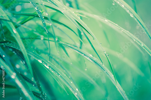 Morning dew on the grass........