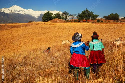 Harvesting in Cordiliera Negra, Peru, South America