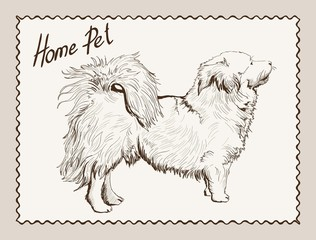 home pet dog