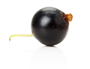 black currant isolated on the white background